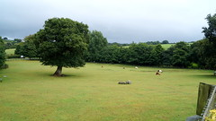 Miniature Pony Centre, Devon (samdiablo666) Tags: trees horses tree field donkeys donkey august devon hay 2015 holidayindevon mummymiasadventures miamummysadventures theoriginalminiatureponycentre