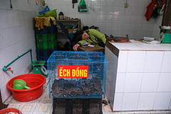 A Frog Shop / Chau Long Market, Tay Ho / Hanoi / Vietnam (silkylemur) Tags: food asia southeastasia market frog vietnam frogs fullframe hanoi canoneos asean indochina 6d wetmarket vitnam  2015  wietnam vitnam  tayho hni   canonef24105mmf4lisusm  efmount     vietnamas canon6d      cnghaxhichnghavitnam  ngnam canoneos6d     azjapoudniowowschodnia   vijetnam  mainlandsoutheastasia      ef ef eos6d chaulongmarket hnuis      maritimesoutheastasia