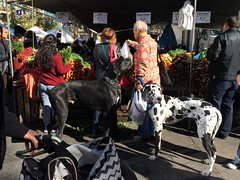 Big Dogs (jschumacher) Tags: nyc dog unionsquare unionsquaregreenmarket
