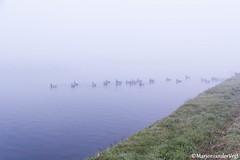 birds (LadyLove1967) Tags: mist water licht bomen vogels spinnenwebben donker koeien bankje zicht warmond leegte geenzicht