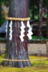 Sacred tree (kawabek) Tags: lensbaby garden shrine  sacredtree   furumine       velvet56  56
