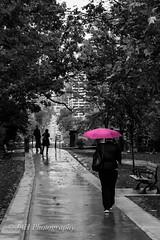 Spadina Avenue (jah32) Tags: pink toronto ontario canada rain umbrella nikon streetscene desaturation streetscape streetscenes selectivecolour d7100