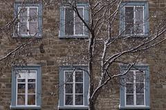 Premire neige sur la basse-ville (Luc Marc) Tags: street winter snow building heritage window architecture hiver qubec neige saintpaul rue fentre patrimoine habitation basseville