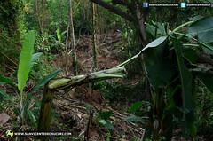 Barrio Jaime Ramirez en riesgo por deslizamientos de tierra