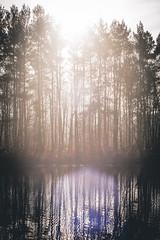 Winter Sun (Komakino89) Tags: winter light shadow sun colour reed last deutschland pond hessen sony days fairy alpha 77 2015 felsberg