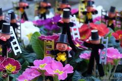 Frhlingsbuntes Glck zum Wochenende (Sockenhummel) Tags: pink fuji sylvester pflanze fortune luck finepix fujifilm flowerpot blume blte neujahr x30 blumentopf frhling schornsteinfeger glcksbringer primel chimneysweep mainzerstrasse glckspilz fujix30