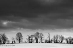 "MH_040 ""Moody"" ( Ed Lee) Tags: winter sky blackandwhite bw cloud white snow black tree monochrome field contrast landscape nikon mood 7100 overcast tele 85 platinumheartaward platinumpeaceaward"