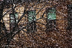 Snowflakes (Cristian Mauriello) Tags: street city urban italy snow tree weather canon snowflakes italia neve albero meteo 1946 fiocchi