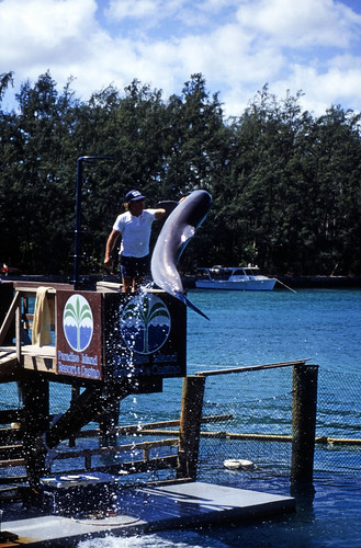 "Bahamas 1988 (287) Paradise Island: Paradise Lake • <a style=""font-size:0.8em;"" href=""http://www.flickr.com/photos/69570948@N04/24070031951/"" target=""_blank"">View on Flickr</a>"