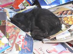 Study Time (Raees Mughal) Tags: raees raeesmughal peshawar pakistan cat kitten study sleep rest