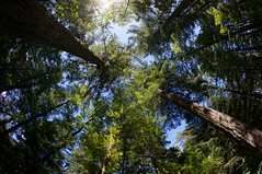shade (rovingmagpie) Tags: washington beaconrockstatepark beaconrock campground campsite camping 8mm touregon summer2016 trees