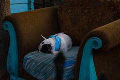 (OgNastyThug) Tags: dog photography colors art chillin
