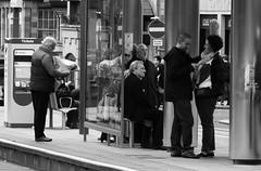 waiting on the tram (byronv2) Tags: edinburgh edimbourg scotland newtown blackandwhite blackwhite bw monochrome peoplewatching street candid crowd tram platform waiting publictransport man woman saintandrewssquare