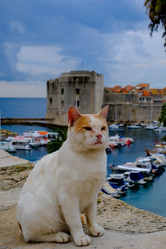 old town cat
