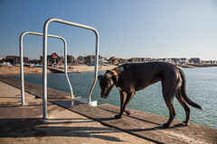 the curious dog (stocks photography.) Tags: michaelmarsh photographer photography whitstable coast seaside dog