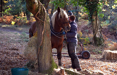 the horse-loggers (2)