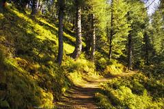 MiranJani Trak (AQAS.Clicks) Tags: landscape pakistan nature tracking nathiagali murree miranjani mushkpuri forest