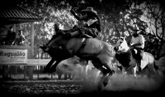 Santiago Sitja (Eduardo Amorim) Tags: gacho gachos gaucho gauchos cavalos caballos horses chevaux cavalli pferde caballo horse cheval cavallo pferd crioulo criollo crioulos criollos cavalocrioulo cavaloscrioulos caballocriollo caballoscriollos pampa campanha fronteira uruguaiana riograndedosul brsil brasil sudamrica sdamerika suramrica amricadosul southamerica amriquedusud americameridionale amricadelsur americadelsud cavalo         hst hest hevonen  brazil eduardoamorim jineteada gineteada