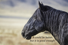 Quote (cuddleupcrafts) Tags: wild horse herd horses photography wildlife utah onaqui west desert quote it could be better but is good enough