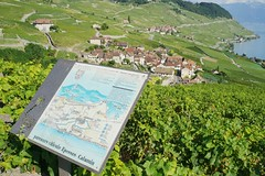 Lavaux vineyard self-guided tour (Riex) Tags: panneau panel tour vineyards vignoble vignes ete summer landscape paysage riex lavaux village epesses vaud suisse switzerland a900 amount 35mm f2 af minoltaamount minolta parcours viticole calamin