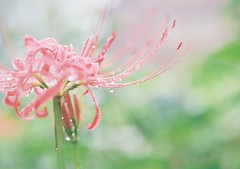 ... (yuhio) Tags: nature  green flower