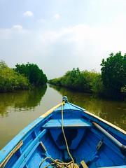 A ride to PICHAVARAM (Ebindev) Tags: backwater backwaters mangroveforest mangroves pichavaram