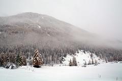 ART_8474m (MILESI FEDERICO) Tags: milesi montagna milesifederico italia italy piemonte piedmont alpi alpicozie altavallesusa altavaldisusa autunno fall federicomilesi nikon nikond7100 d7100 iamnikon automne visitpiedmont valsusa valdisusa valliolimpiche valledisusa nital 2016 novembre europa europe neve nevicata snow tokina tokina1116