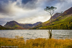 Fleetwith Pike, Haystacks and the famous 'lone tree', Buttermere