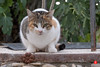 05nov16-0096 (Tinico Jones) Tags: mace katu кот mačka котка gat kočka kat kass kissa chat gato katze γάτα macska köttur cat gatto kaķis katė мачка qattus katt kot pisică кіт cath קאַץ