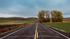 Drive (Fall Palouse Edition) *Explore* (Pedalhead'71) Tags: rosalia washington unitedstates us drive road palouse fall