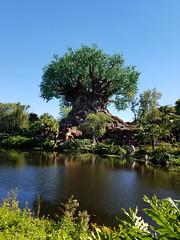 TreeOfLife_007 (*Ice Princess*) Tags: nature animalkingdom disney orlando florida disneyworld waltdisneyworld amusementpark tree treeoflife