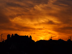 birds are flying on fire (window's view 4) (VinZo0) Tags: sky fire birds roof toit city street view cheminée antenne cloud amazing marseille massilia explore