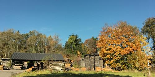 Scierie en automne