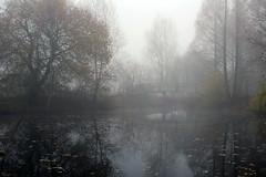 the day the mist stayed (Elly Snel) Tags: pond vijver mist bomen trees brug bridge