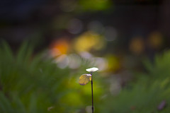 Simple autumn (milance1965) Tags: canon 600d 50mm 1 4 herbst autumn november macro gelb