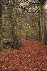 IMG_8911 (Geoff_B) Tags: badockswood bristol walkinthewoods autumn november unprocessed unedited