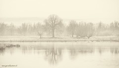 winter is coming (gerardkanters.nl) Tags: foggylandscapes gerard kanters biesbosch canon fotografie