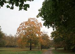 044-IMG_6648 (hemingwayfoto) Tags: ahorn englischergarten flickr georgengarten hannover herbst herbstbaum herbstlaub herrenhusergrten landeshauptstadt landschaftsgarten park weg