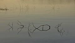 Minimalisme aquatic jugant amb la llum i els reflexes (Joan Ruiz) Tags: minimalisme reflexes