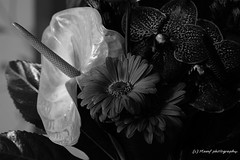 Black and white flower art. ((c) MAMF photography..) Tags: flower flowers flora art arty blackandwhite blackwhite bw biancoenero dark england enblancoynegro flickrcom flickr google googleimages gb greatbritain greatphotographers greatphoto inbiancoenero image mamfphotography mamf monochrome nikon noiretblanc noir negro nikond7100 photography photo pretoebranco schwarzundweis schwarz uk unitedkingdom zwartenwit zwartwit zwart