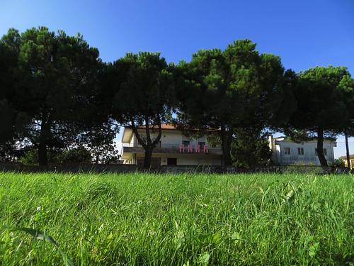 bäume in rom