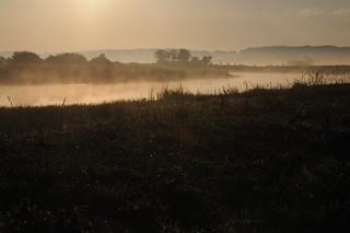 Im Morgen-Nebel - Blick über die Treene nach Nordfriesland; Norderstapel, Stapelholm (40)