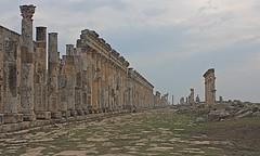 Great Colonnade, Apamea, Syria (susiefleckney) Tags: apamea syria hama ghabplain seleucid roman byzantine arab ruins archaeology ancient colonnade greatcolonnade cardo mainstreet westernasia