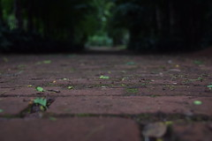 ways and choices (ana_buschinelli) Tags: trees green nature outside nikon bokeh days rainy ways