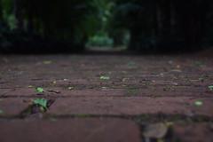 ways and choices (ana_buschinelli) Tags: trees green nature outside nikon bokeh days rainy ways