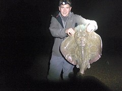 "Paul Blake's shore caught 12lb Undulate Ray • <a style=""font-size:0.8em;"" href=""http://www.flickr.com/photos/113772263@N05/22554888910/"" target=""_blank"">View on Flickr</a>"
