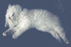 Miau (13) (Ro Ho) Tags: blackandwhite bw cats nature animals tiere natur katze katzen miau mize catmoments