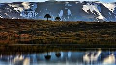Caviahue (Miradortigre) Tags: patagonia lake argentina reflections lago reflejos caviahe パタゴニア 巴塔哥尼亞 патагония 巴塔哥尼亚 पेटागोनिया