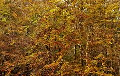 EL MONTSENY 2 (Andreu Anguera) Tags: naturaleza otoño parquenatural elmontseny barcelpona girona catalunya andreuanguera