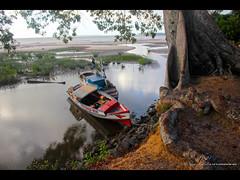 Samauma (W Mello) Tags: barcos reflexo par amazonas maraj samaumeira monsars